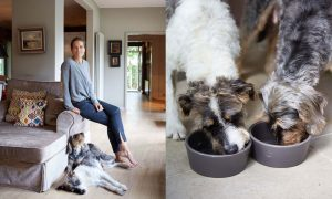 cloud7-dog-bowl-oliver