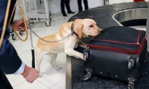 sniffer dog stock image