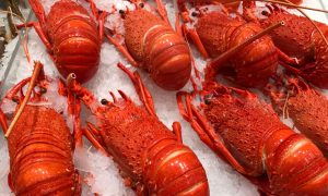 Western Rock Lobster file image